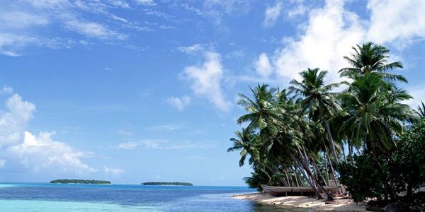 Сонник пальмы